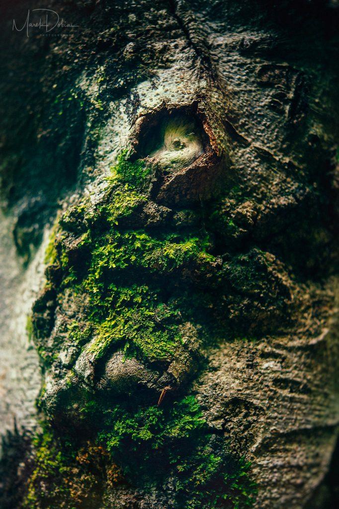 Predaj umeleckých fotografií - Iné svety II - Fotograf Marek Dobias