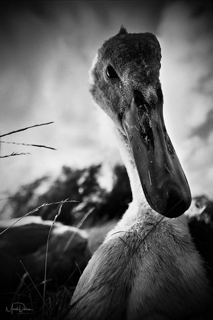 Predaj umeleckých fotografií - Mokré ráno - Fotograf Marek Dobias