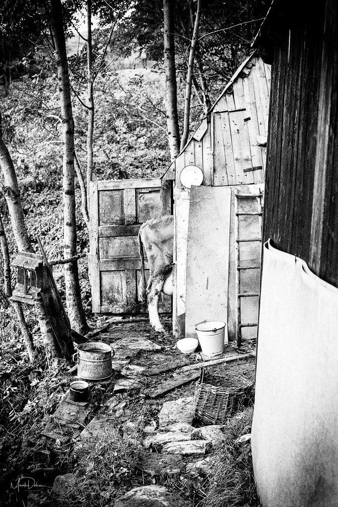 Predaj umeleckých fotografií - Stratený raj - Fotograf Marek Dobias