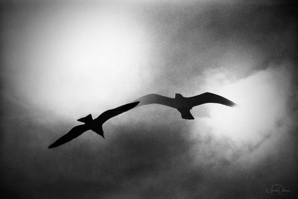 Predaj umeleckých fotografií - Volania - Fotograf Marek Dobias